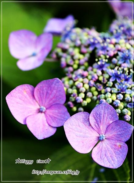 椎茸つくねの照焼き弁当と紫陽花♪_f0348032_17541566.jpg