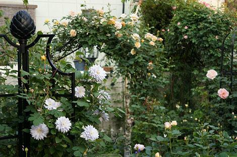 私の バラとーガーデニングショー 2012_a0264538_08005673.jpg