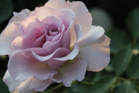 私の バラとーガーデニングショー 2012_a0264538_08051445.jpg