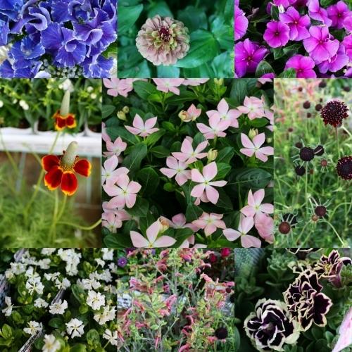 お花販売のお知らせ♪_e0086738_07113130.jpg