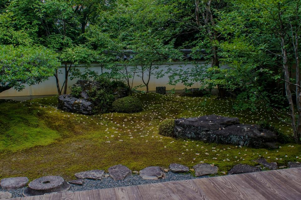 東林院~沙羅の花を愛でる会_e0363038_14231162.jpg