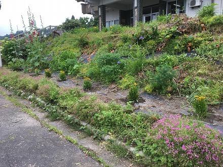 花壇の花植え(東地域開発センター)_a0346455_11420062.jpg