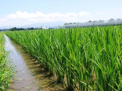七城米 長尾農園 平成29年度の田植えを現地取材_a0254656_17460127.jpg