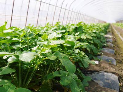 七城米 長尾農園 平成29年度の田植えを現地取材_a0254656_17535779.jpg