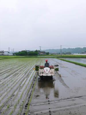 七城米 長尾農園 平成29年度の田植えを現地取材_a0254656_18001698.jpg