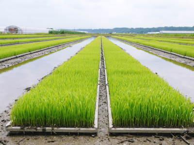 七城米 長尾農園 平成29年度の田植えを現地取材_a0254656_18080170.jpg