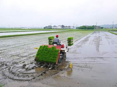 七城米 長尾農園 平成29年度の田植えを現地取材_a0254656_18195509.jpg