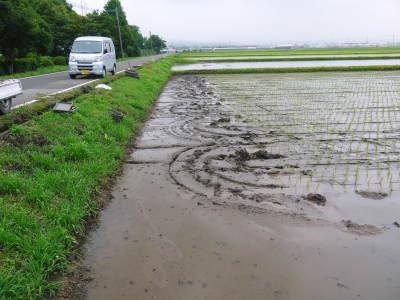 七城米 長尾農園 平成29年度の田植えを現地取材_a0254656_18284812.jpg