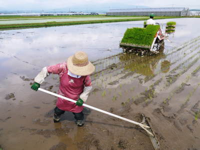 七城米 長尾農園 平成29年度の田植えを現地取材_a0254656_18320679.jpg