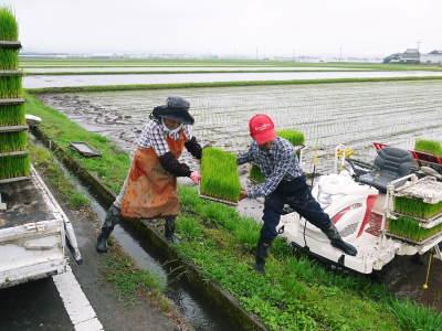 七城米 長尾農園 平成29年度の田植えを現地取材_a0254656_18373430.jpg