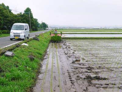 七城米 長尾農園 平成29年度の田植えを現地取材_a0254656_18453720.jpg