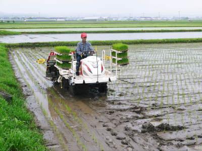 七城米 長尾農園 平成29年度の田植えを現地取材_a0254656_18501115.jpg