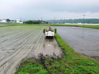 七城米 長尾農園 平成29年度の田植えを現地取材_a0254656_18531274.jpg