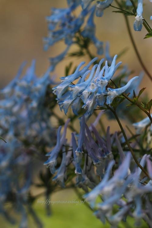 高山植物館 * Part.2_d0367763_21554284.jpg