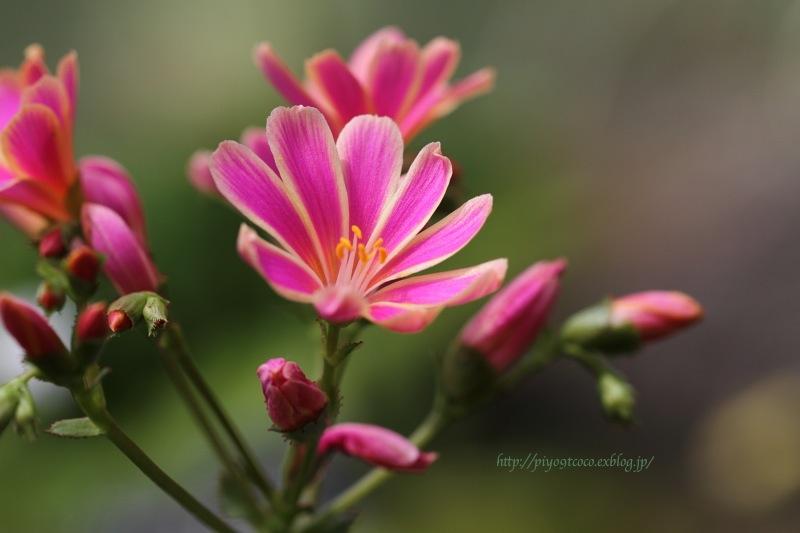 高山植物館 * Part.2_d0367763_21554397.jpg