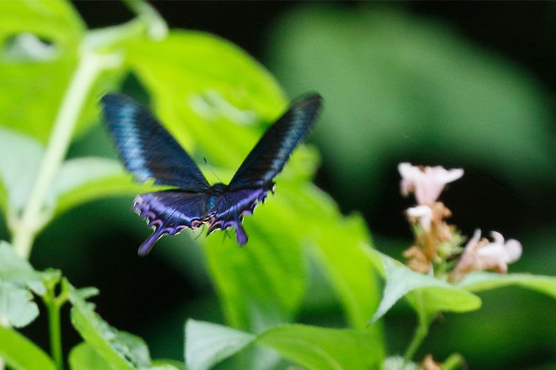またまた・・・蝶を~_f0368272_22092770.jpg