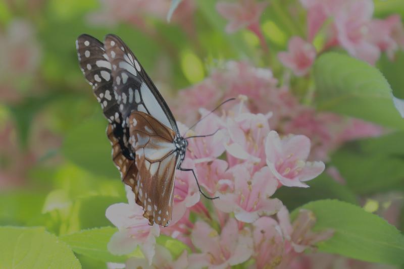 またまた・・・蝶を~_f0368272_22103797.jpg