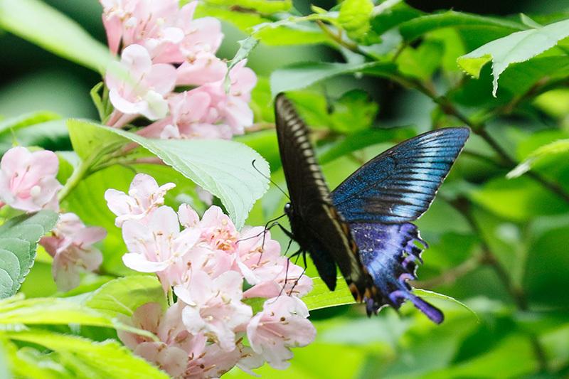 またまた・・・蝶を~_f0368272_22110033.jpg