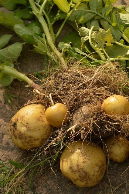 地場野菜を味わう_a0233896_18332224.jpg