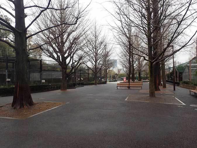 4月、雨と桜の上野動物園~NEWフェイス・クロキツネザル_b0355317_21061639.jpg