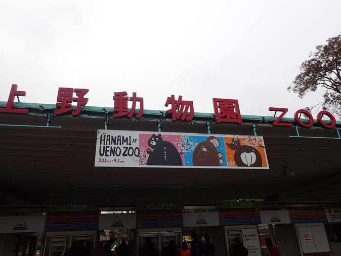 4月、雨と桜の上野動物園~NEWフェイス・クロキツネザル_b0355317_21272738.jpg