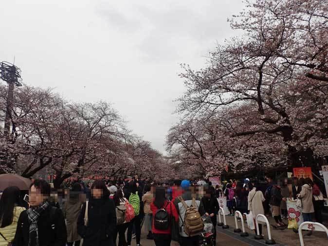 4月、雨と桜の上野動物園~NEWフェイス・クロキツネザル_b0355317_21282787.jpg