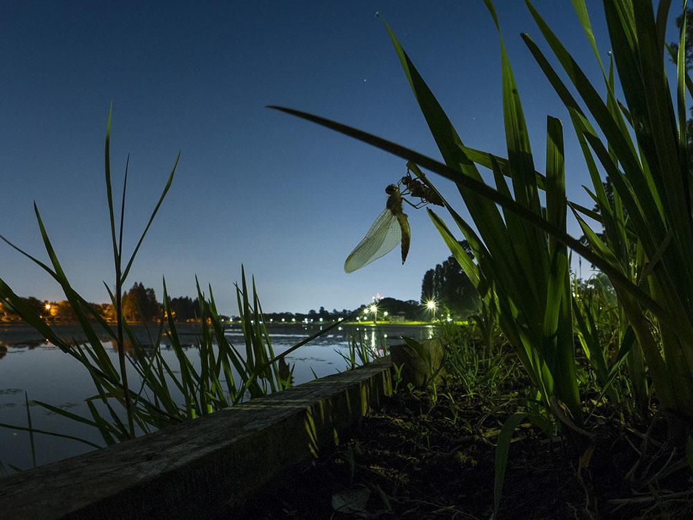 夜の自然公園 コフキトンボ羽化_f0324026_00144372.jpg