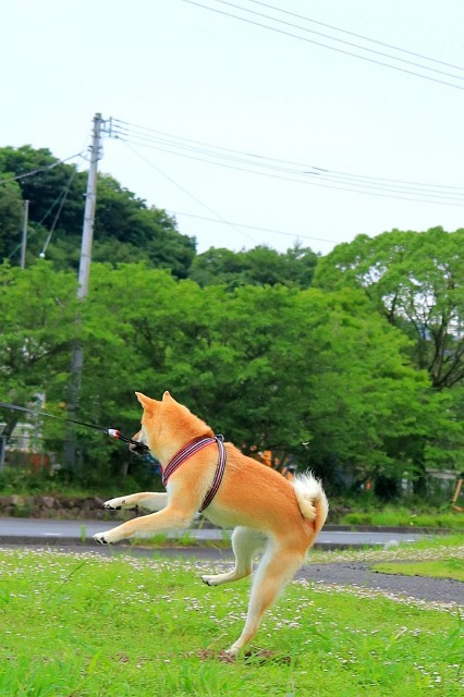 ヒトコマ写真(51)_e0365036_13335509.jpg