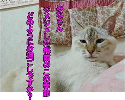 b0151748_12452264.jpg