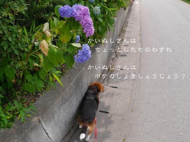 b0359692_20385760.jpg