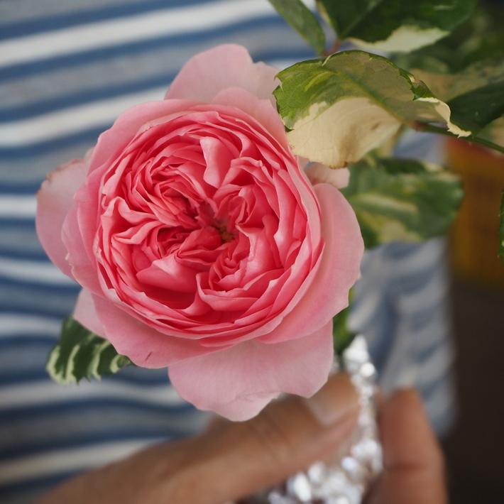 お店のバラたち①_a0292194_200371.jpg