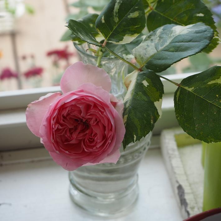 お店のバラたち①_a0292194_206165.jpg