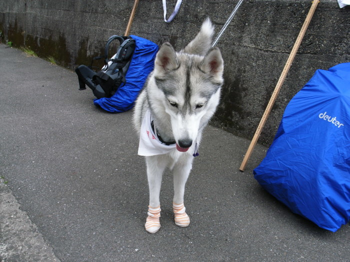 First Pilgrimage for Siberian Husky Hana II, May 4th 2006 (3)_c0049299_21281869.jpg