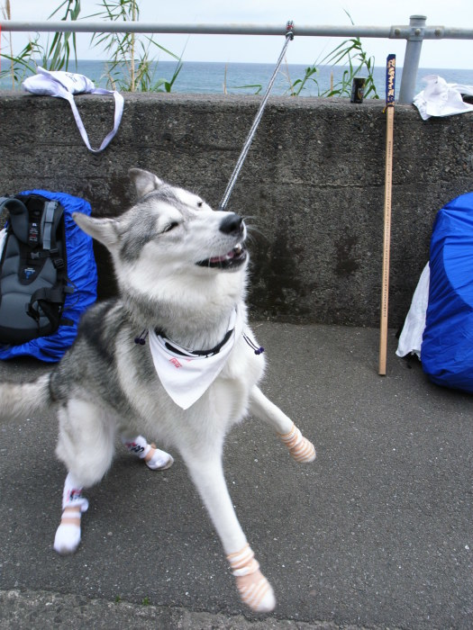 First Pilgrimage for Siberian Husky Hana II, May 4th 2006 (3)_c0049299_21282015.jpg