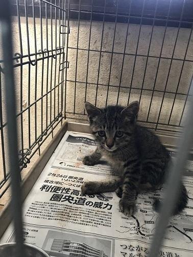 負傷子猫の医療費ご協力をお願いします_f0242002_20482853.jpg