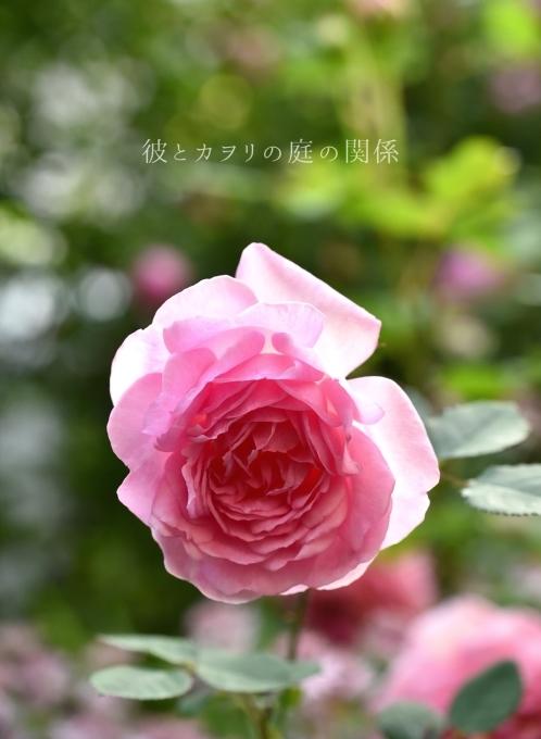 c0365716_20121977.jpg