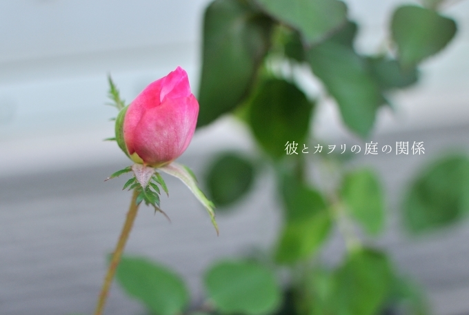 c0365716_20123650.jpg