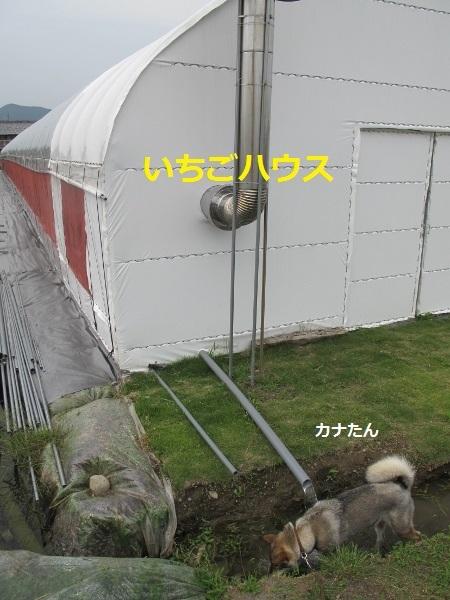 f0143123_09513657.jpg