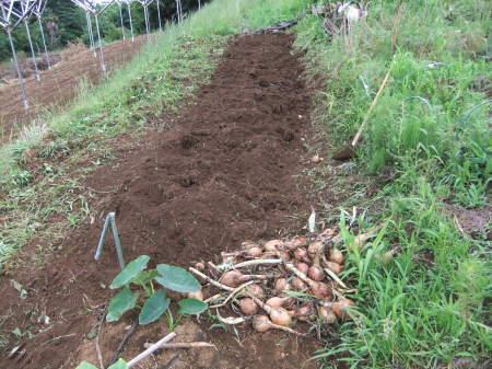 草を採って、レタスの定植_b0137932_17184740.jpg