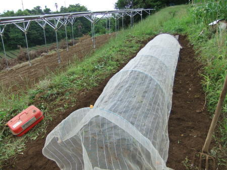 草を採って、レタスの定植_b0137932_17231005.jpg