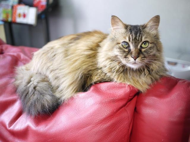 猫のお留守番 ポポちゃん編。_a0143140_23050193.jpg