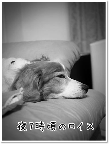 d0013149_00302741.jpg