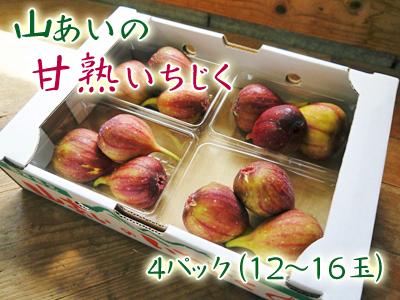 甘熟イチジク 今年も8月中旬からの出荷に向け、順調にそして元気に成長中!_a0254656_16400601.jpg