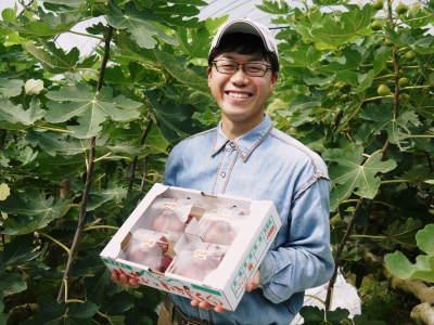 甘熟イチジク 今年も8月中旬からの出荷に向け、順調にそして元気に成長中!_a0254656_18144215.jpg