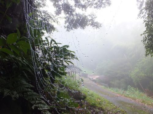 雨上がりの庭、鑑賞会_d0336460_22594194.jpg