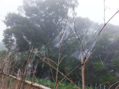 雨上がりの庭、鑑賞会_d0336460_23031433.jpg