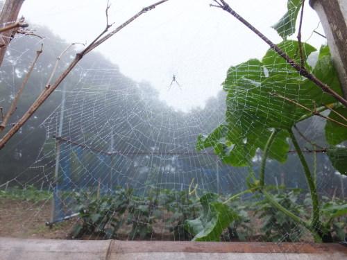 雨上がりの庭、鑑賞会_d0336460_23040557.jpg