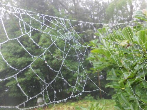 雨上がりの庭、鑑賞会_d0336460_23051837.jpg