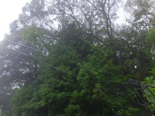 雨上がりの庭、鑑賞会_d0336460_23061184.jpg