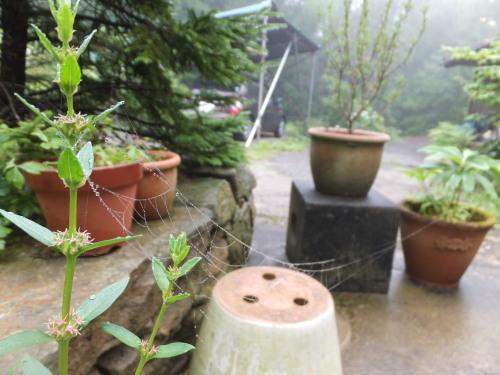 雨上がりの庭、鑑賞会_d0336460_23073096.jpg